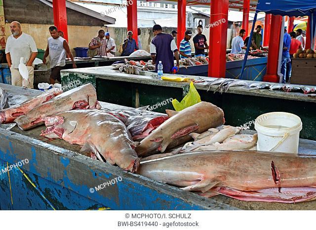 fresh sharks for sale at the Sir Selwyn Selwyn-Clarke fish market in Vicoria, Seychelles, Mahe
