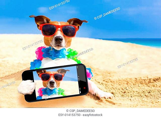 dog at the beach selfie