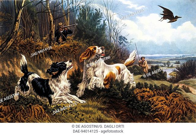 Woodcock hunting, 1880, engraving by Basil Bradley (1842-1904)