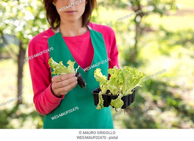 Woman working in her vegetable garden, Italy