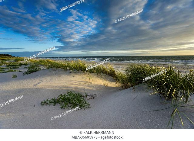 Baltic beach with marram grass in sunlight
