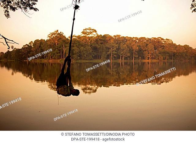 child swinging from tree, phnom penh, cambodia