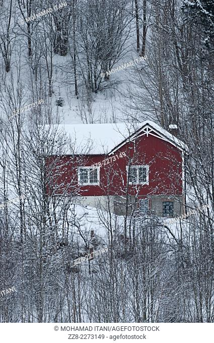 Red house in the forrest