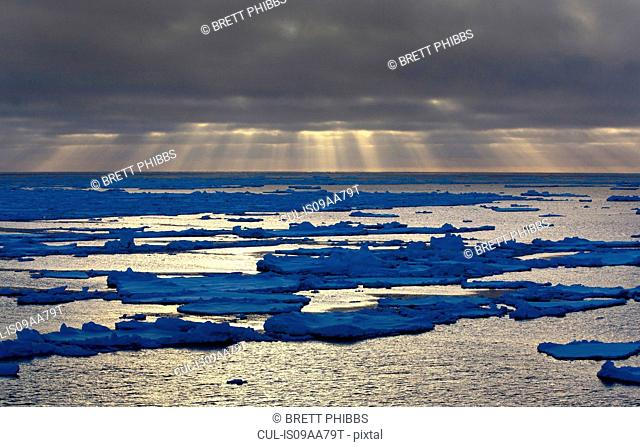 Ice floe in the Southern Ocean, 180 miles north of East Antarctica, Antarctica