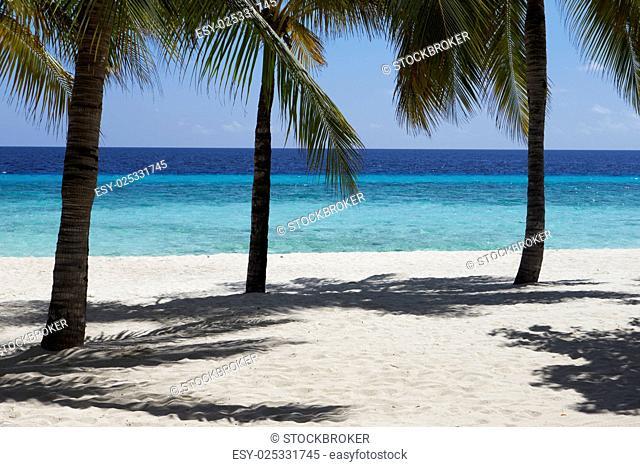 Beautiful Deserted Tropical Palm Beach In Maldives