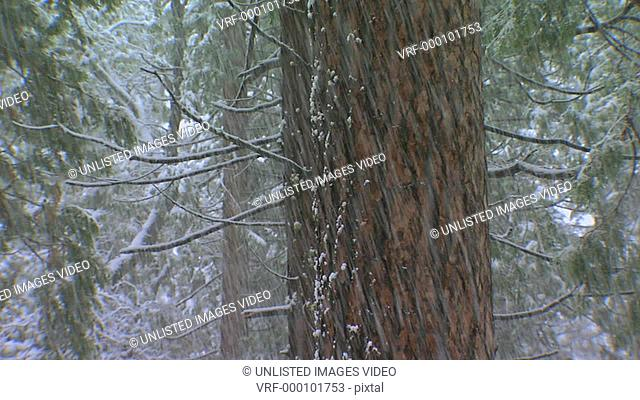 Snow falling in front of tree trunk