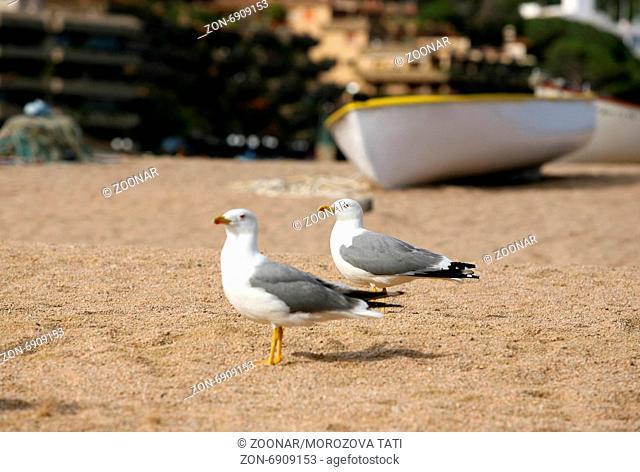 Seagulls on a coast