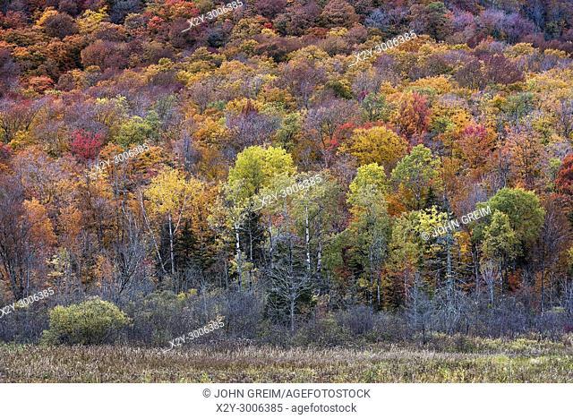 Autum forest trees, Killington, Vermont, USA
