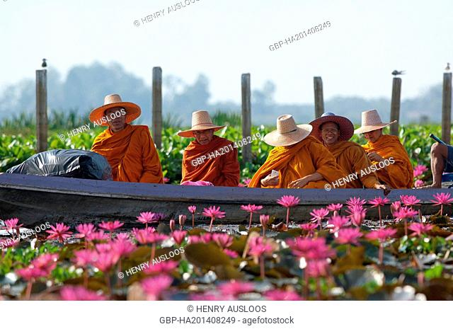 Thailand, Phatthalung, Thale Noi, Monks, pinks, water, lilies