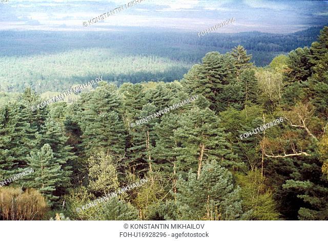 East Siberia, Eatern Siberia, Siberia, forest, forestland, landscape, nature