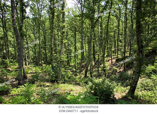europe, italy, tuscany, montieri, forest