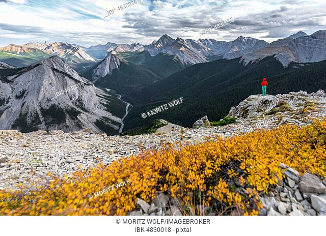 Female hiker on top of the Sulphur Skyline Trail, views over mountain landscape and river valley, panoramic view, Nikassin Range, Jasper National Park