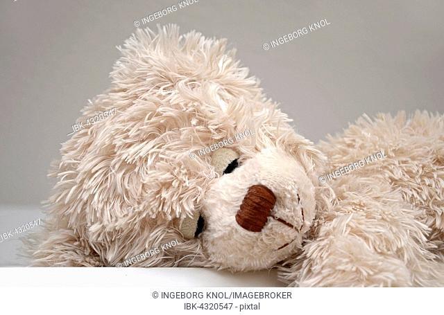 Sleeping teddy bear, cuddly toy