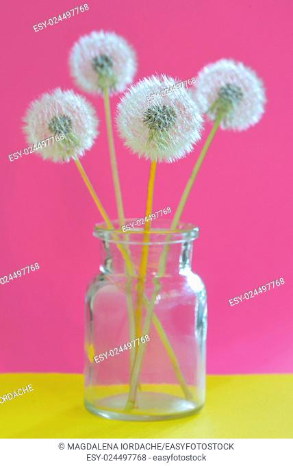 Bouquet of dandelions in vase on pink background