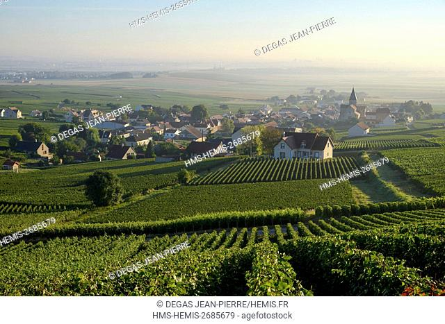 France, Marne, Sacy, mountain of Reims, vineyards of Champagne wih a village in the background