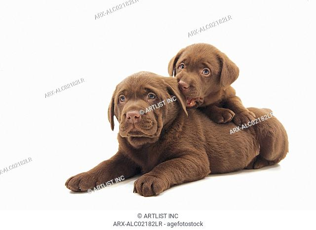 Two puppies snuggling up