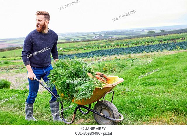 Man on farm pushing wheelbarrow of carrots