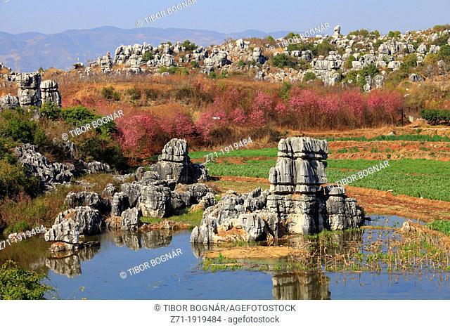 China, Yunnan, Shilin, Stone Forest