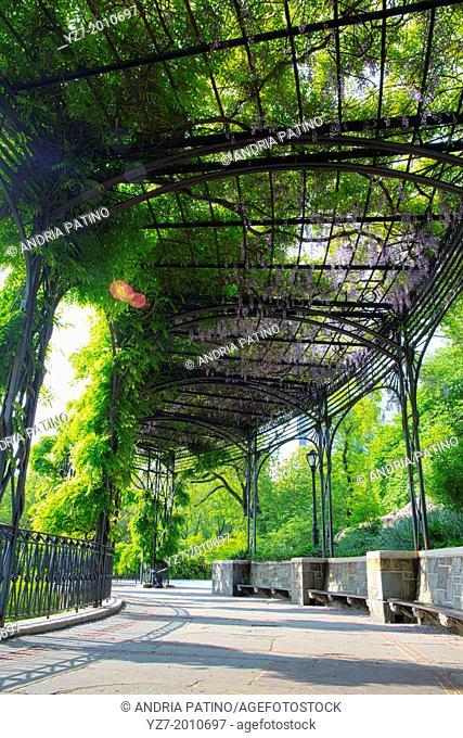 Wisteria Pergola in Central Park, NY, USA