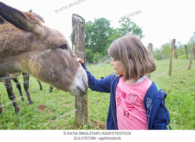 Beautiful close up of a dark blond hair caucasian little girl in blue jacket and jeans feeding donkey on a farm