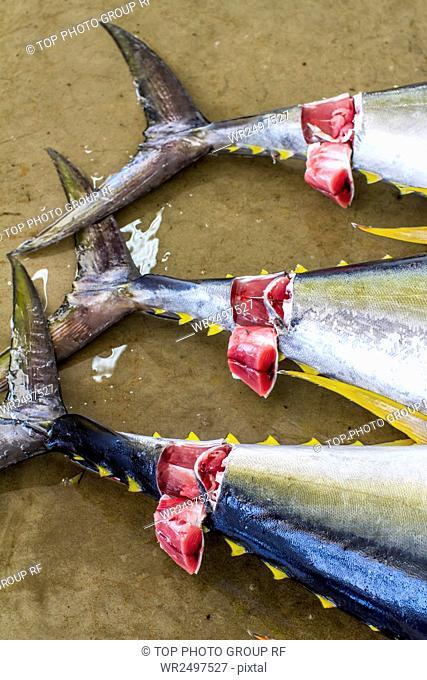 Katsuura,Fishing Port,Tuna Fish,Auction,Street View,Japan