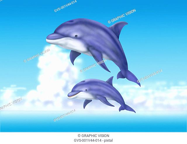 Illustration of Dolphins Jumping