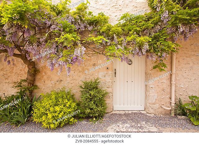 Wisteria srrounds a doorway in Saint-Dyé-sur-loire, Loir-et-Cher, Centre, France