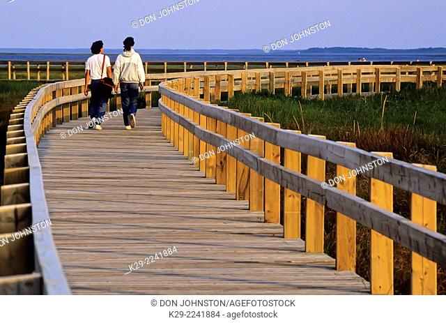 Tourists walking a boardwalk in sensitive dune area, Kouchibouquac National Park, NB, Canada