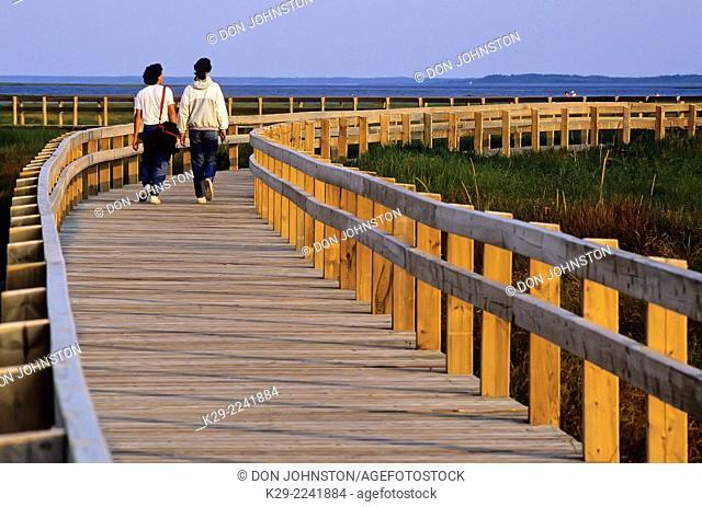 Tourists walking a boardwalk in sensitive dune area, Kouchibouquac National Park, NB, Canada