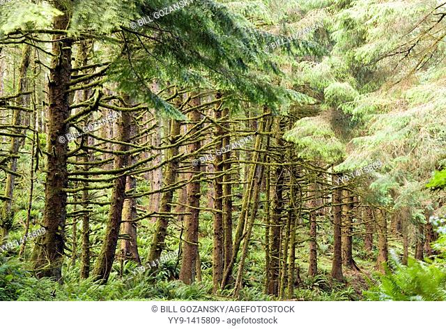 Enchanted Forest - Ecola State Park - Cannon Beach, Oregon