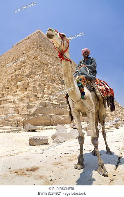 Pyramid of Khafra with cameleer, Egypt, Kairo