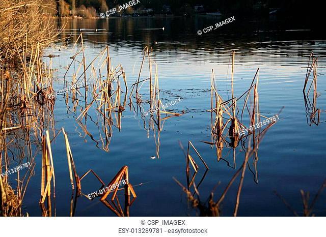 Deer Lake Park - Vancouver, Canada