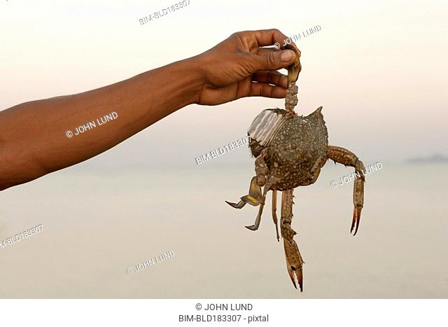 Close up of hand holding dangling crab