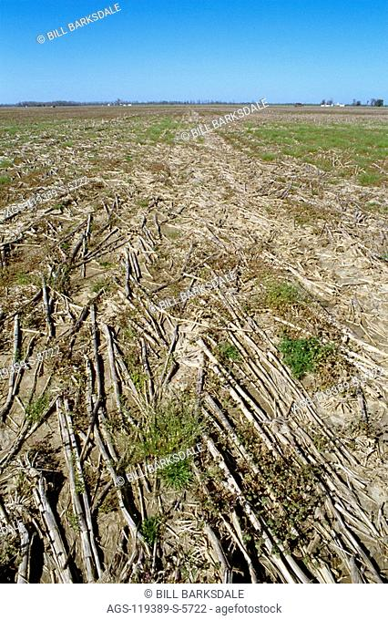 Agriculture - Field of corn residue and winter weeds, in the early Spring / Mississippi, USA