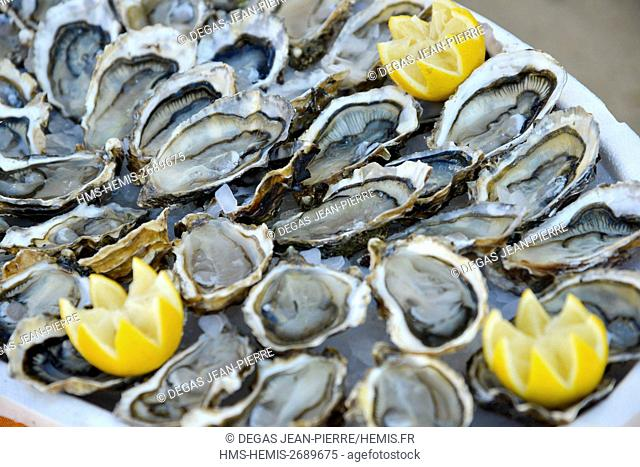 France, Herault, Bouzigues, tray of oysters of Thau lagoon