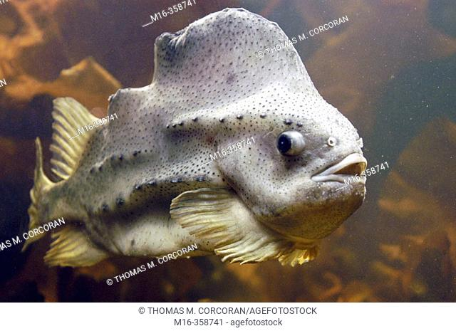 Rocky shore fish National Aquarium