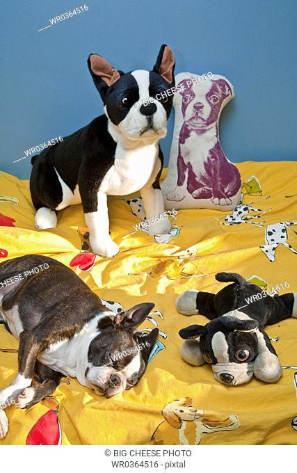 dogs and toys on child's bed