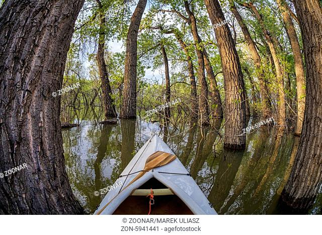 canoe bow with a paddle on a lake with submerged trees - distorted fisheye perspective - Lonetree Reservoir near Loveland, Colorado