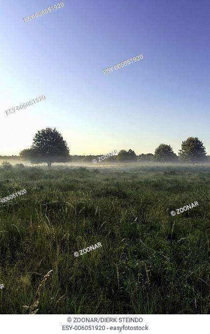 Landscape in the morning mist