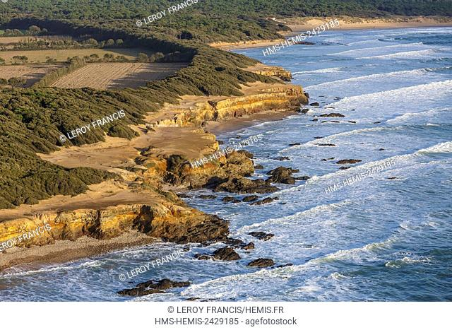 France, Vendee, Jard sur Mer, waves washing against the cliff and trees carved by the wind (aerial view)