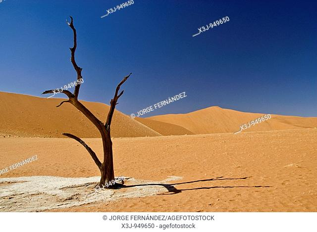 Silhouette of a dead tree in the Deadvlei, Namib Naukluft National Park, Sossusvlei, Namibia, Africa