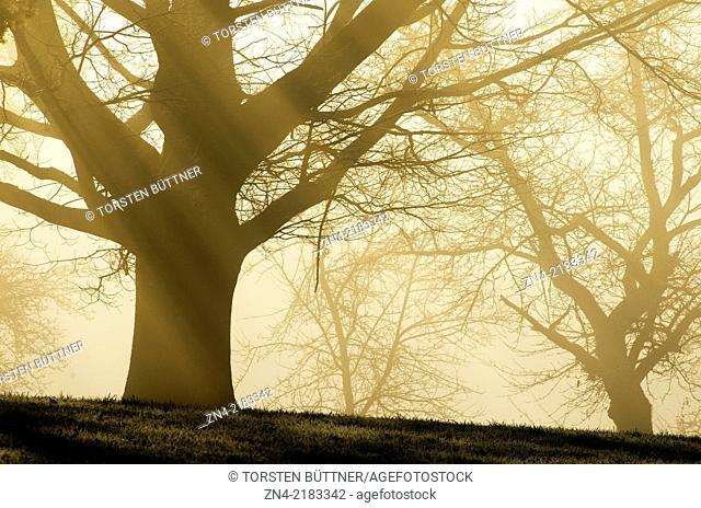 Sunbeams gazing through trees on Magdalenaberg Hill in Bad Schallerbach. Austria