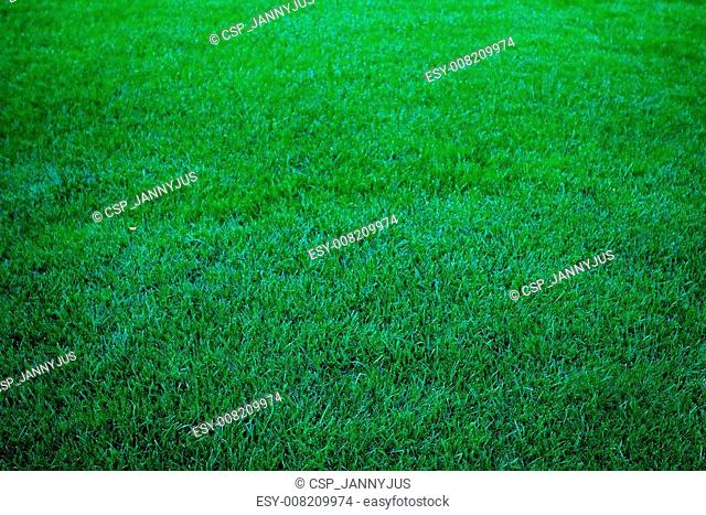 background of lush green grass
