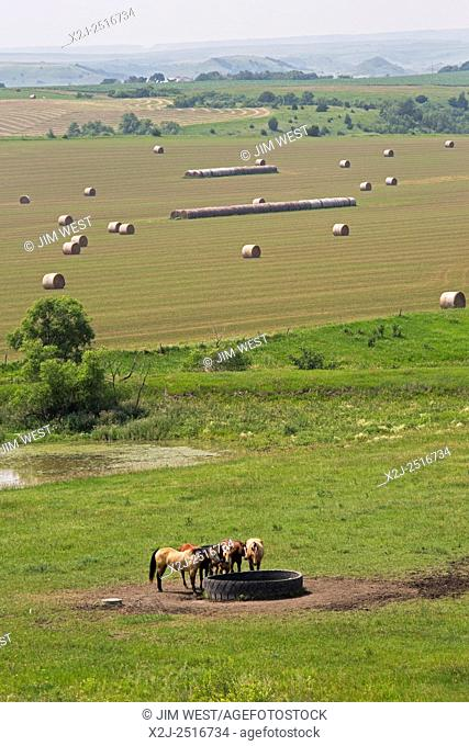 Gregory County, South Dakota - Horses drink at a water tank made from an old tire