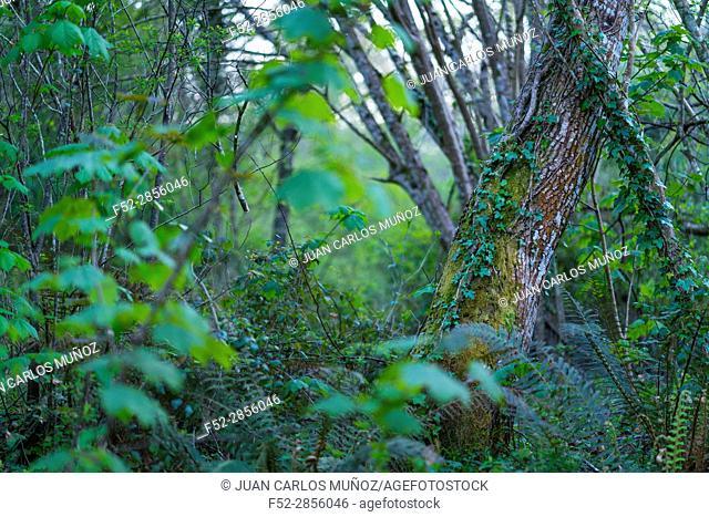 The Holy Road Lebaniego, Senda Fluvial del Nansa, Cantabria, Spain, Europe