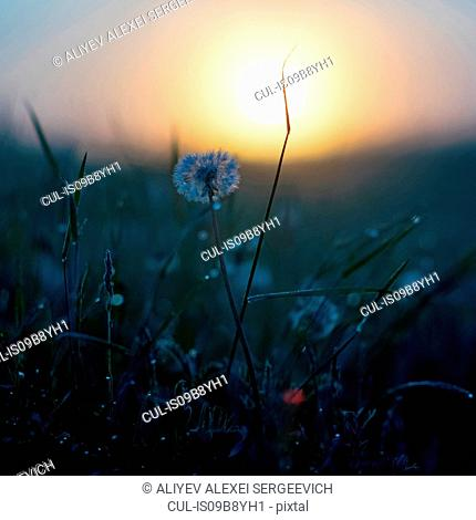 Wildflowers, Ural, Sverdlovsk, Russia