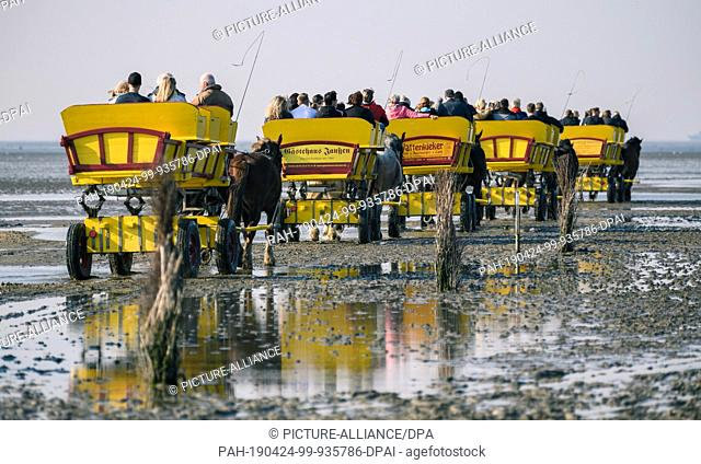 """20 April 2019, Lower Saxony, Cuxhaven: Carriages with several persons are pulled by horses from Cuxhaven through the Wadden Sea to the island """"""""Neuwerk"""""""" at low..."""