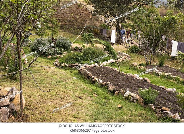 garden in a rural area near San Jose del Pacifico, Oaxaca, Mexico