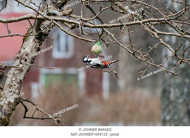 Bird eating in tree