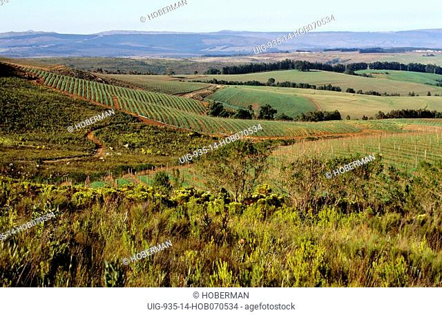 Cape Wine Route, Paarl, Western Cape